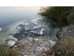 Βούρκος και βιομηχανικά απόβλητα στην Λίμνη της Κοώνειας