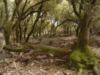 Συνεχίζεται η αποψίλωση των δασών