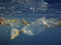 Τόνοι πλαστικού κολυμπούν